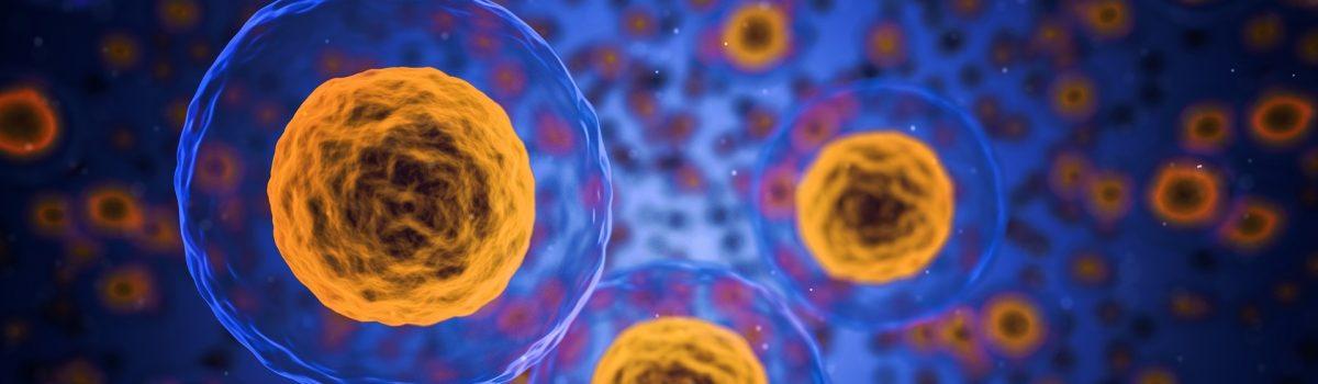 Przeszczep tłuszczu z komórkami macierzystymi zawieszonymi w oczyszczonej tkance tłuszczowej – Lipotransfer micro